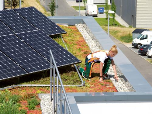 Roof gardener on a green roof with photovoltaics