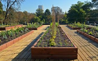 Vegetable and herb plots on a rooftop with wooden decking