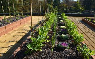 Plant beds with vegetables and herbs on a roof